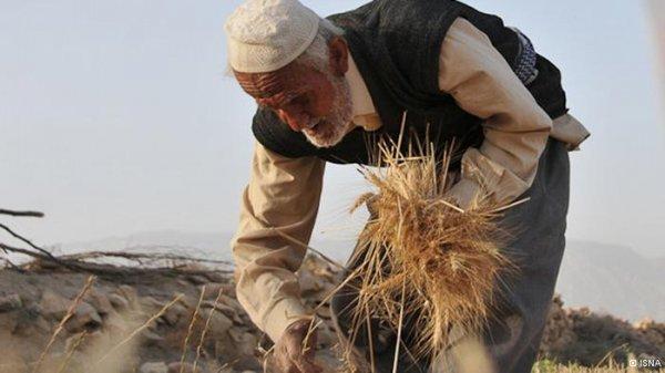 بخشی از مساله نافرجامی در توسعه ملی به طرز برخوردی مربوط است که در فرایندهای تصمیمگیری و تخصیص منابع با جامعه روستایی و بخش کشاورزی وجود دارد. به گزارش