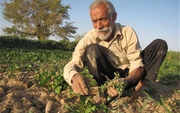 به گزارش خبرگزاری تسنیم؛ یکشنبه ۱۴ خرداد ۱۳۹۶ آمده است : نائب رئیس کمیسیون کشاورزی مجلس شورای اسلامی گفت: تکمیل زنجیره تولید از راهکارهای کاهش میزان دخالت دلالان و واسطهها در امر توزیع محصولات کشاورزی است.